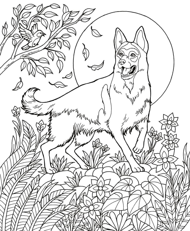Dog Book Free Download - German Shepherd