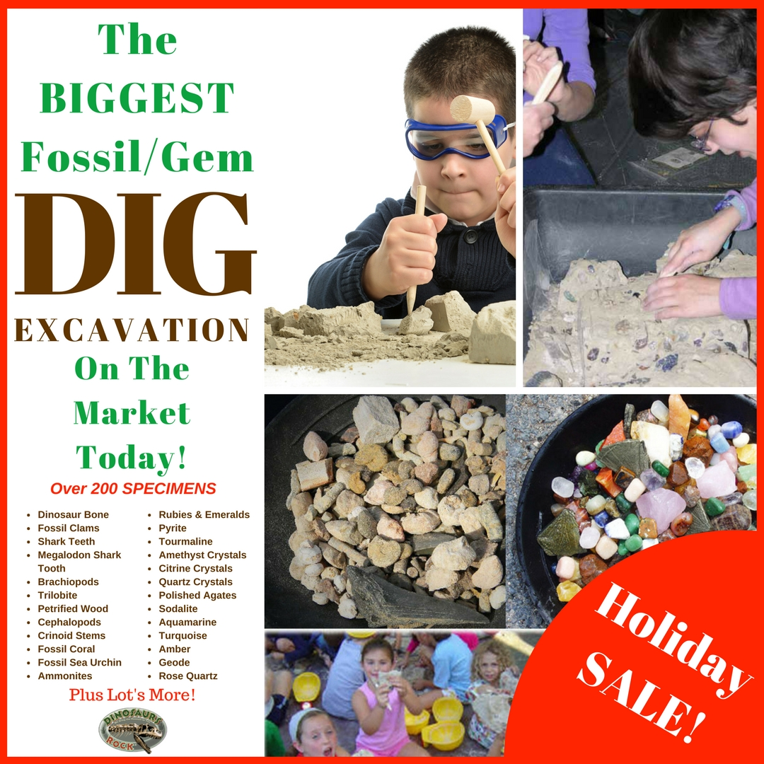 A REAL Fossil Dig - Right In Your Own Home!