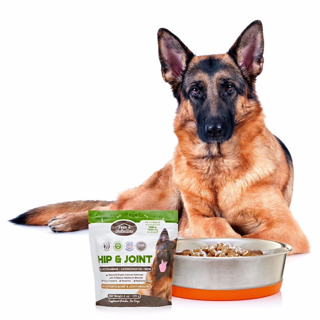 German Shepherd with Hip & Joint Supplement