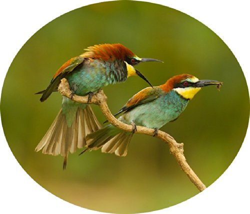 Two Birds on a Twig