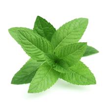 Peppermint Cannabidiol strong CBD Oils