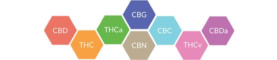 Cannabinoids Hemp CBD Tincture