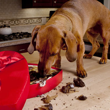 10 Foods Bad for Dogs