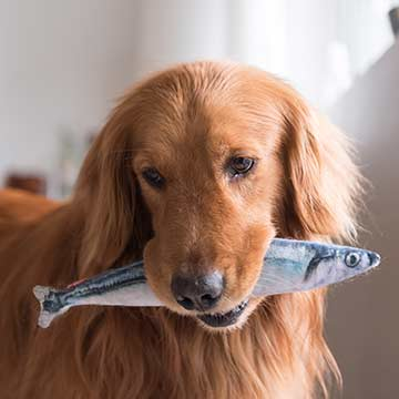 Is Fish Oil Safe For Dogs