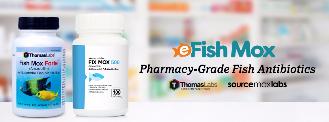 Pharmacy Grade Fish Antibiotics