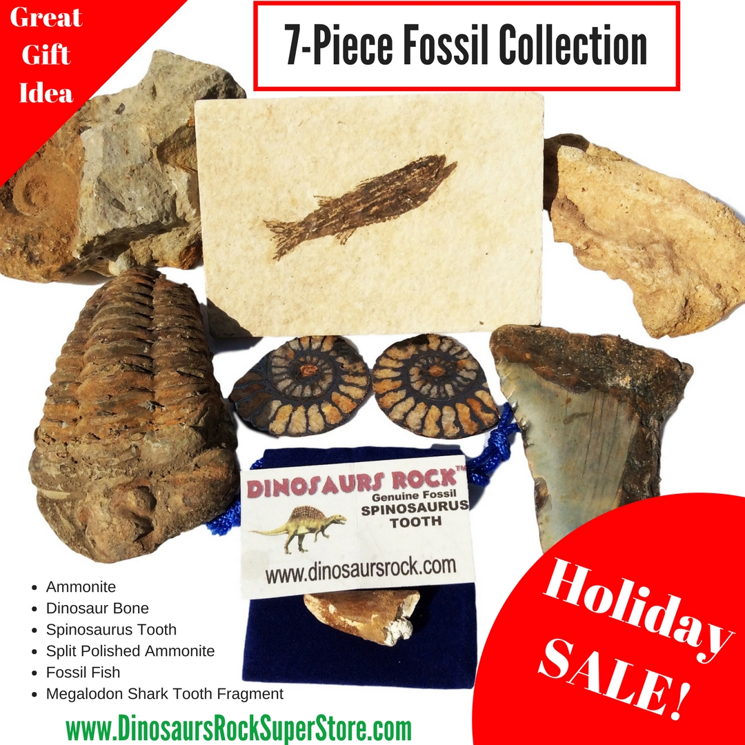 7 Piece Fossil Collection Holiday SALE