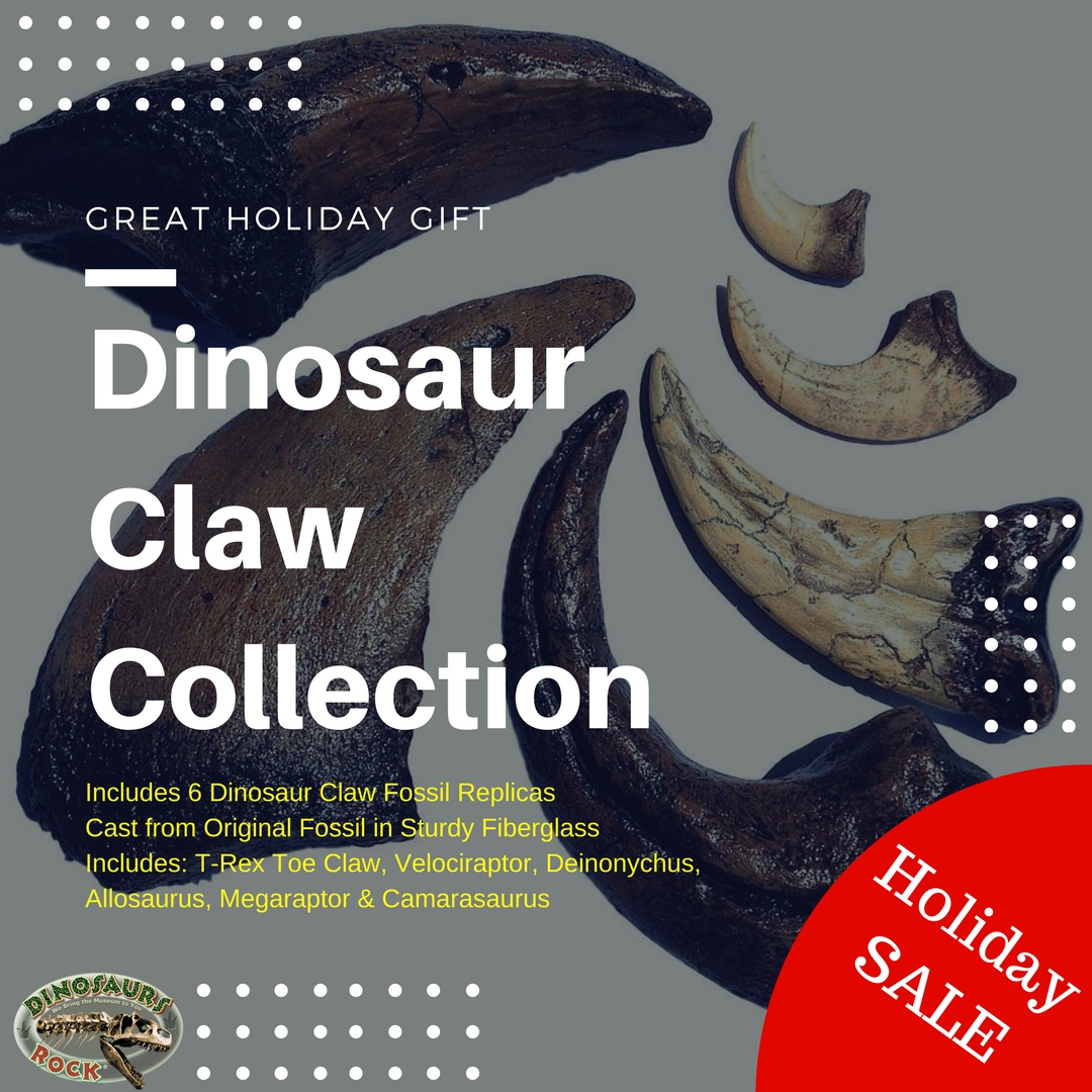 Dinosaurs Claw Collection