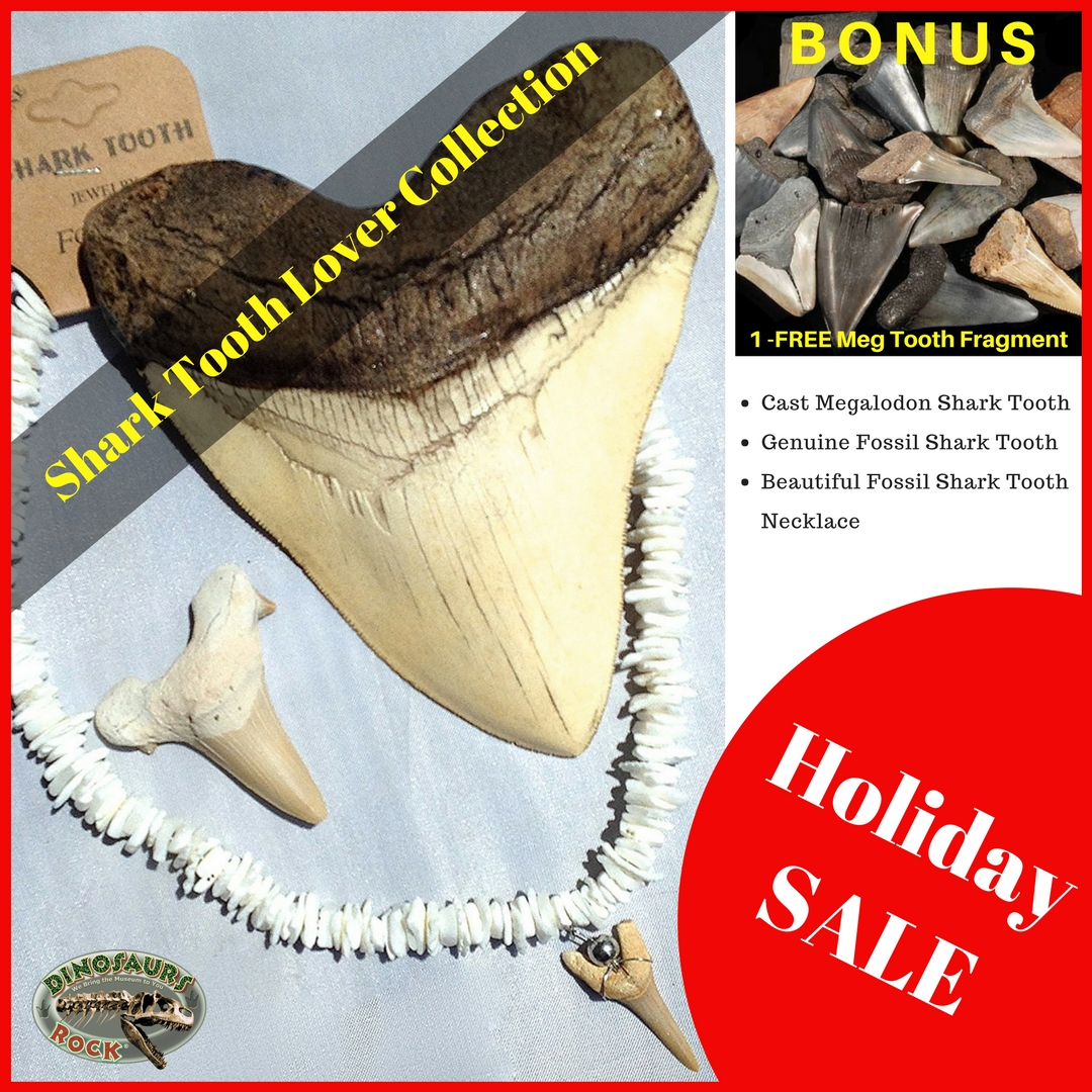 Shark Tooth Lover Collection