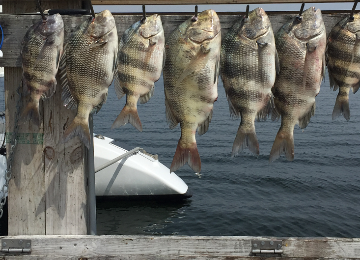 Living Right Fishing Charters