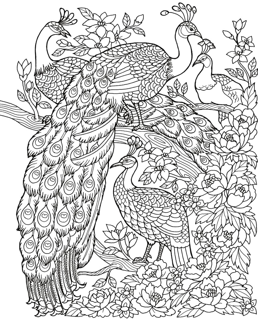 Freebie Friday Peacock Adult Coloring Book