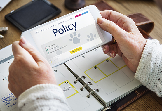 What Policy Is Right For My Pet Insurance