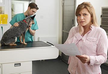 Should I Get Pet Insurance