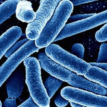 Stops Bacteria