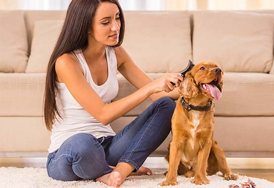 5 Surprising Dog Grooming Tools You Can Find at Home