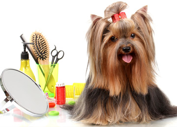 Save money on dog grooming