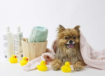 Choosing a Dog Shampoo