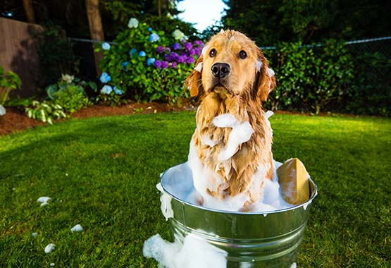 The Importance of Using The Right Pet Shampoo & Conditioner