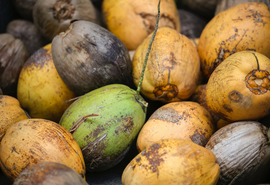 coconuts & the paleo diet