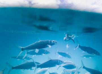 Wild & sustainable fish