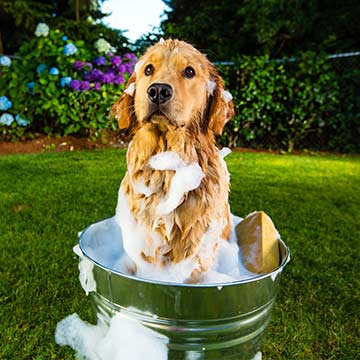 The Importance of Using the Right Pet Shampoo and Conditioner