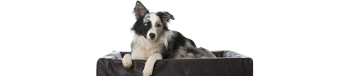 What to Look For in a Dog Bed