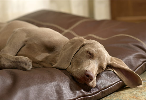 A Dog Bed Made of Non-Toxic Materials