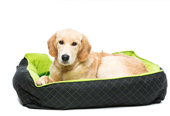 A Dog Bed Easy to Clean