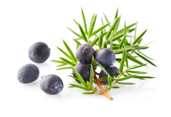 Juniper Berry Northern Fir Beard Oil