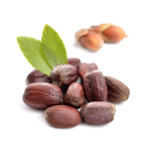 Northern Fir Beard Oil Jojoba Seed