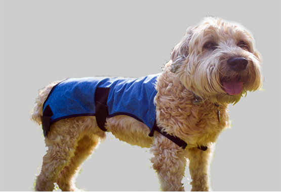 Dog wearing PetPatch Recovery Coat