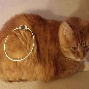 Cat with Pet Patch Loop