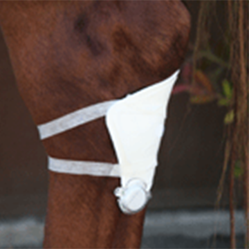 HealFast Square Patch on Horse Leg