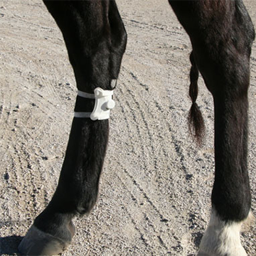 Crescent Patch on Horse's Leg