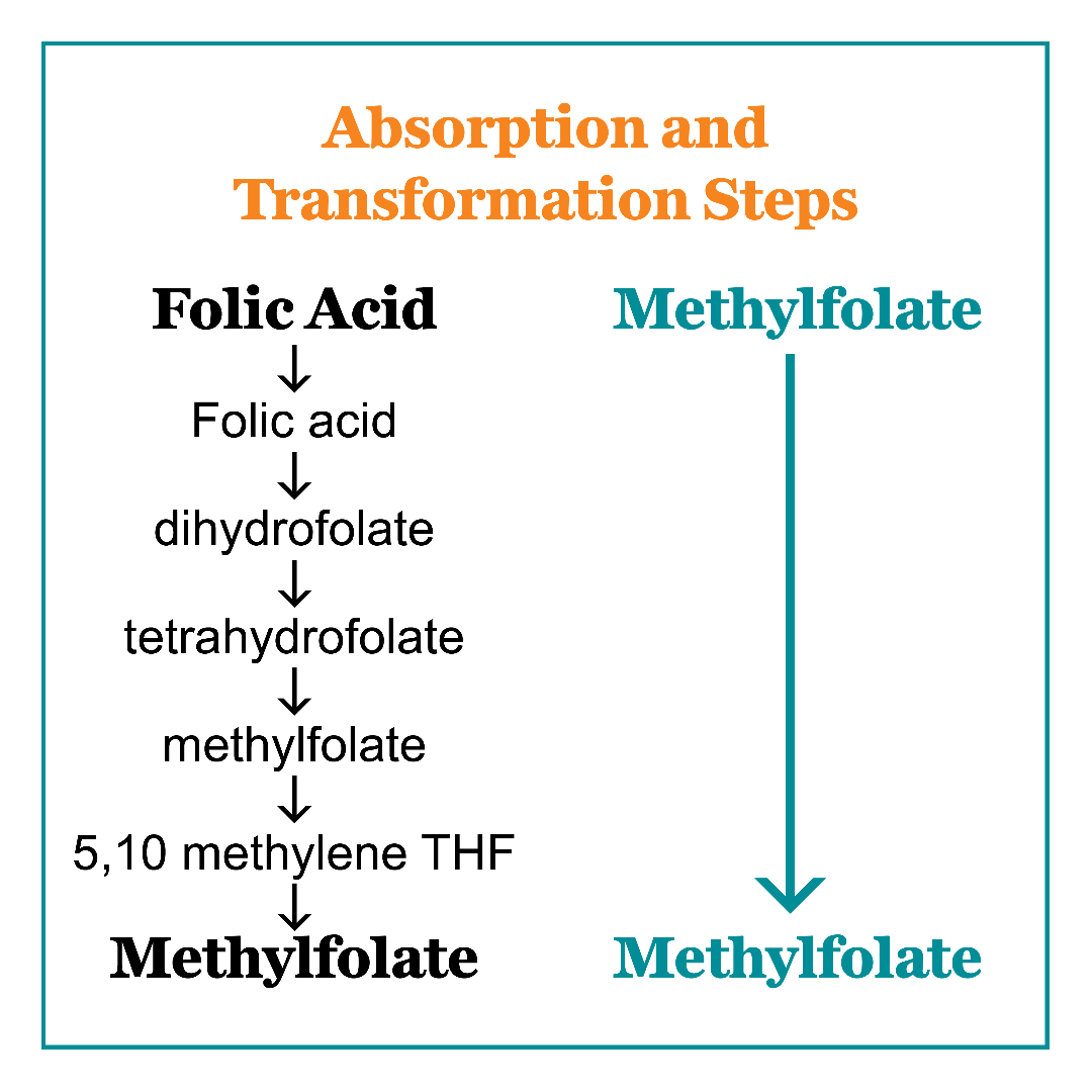 Absorption and Transformation Steps of Folic Acid vs Methylfolate