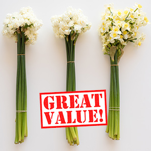 Scented Daffodils Erlicheer - Bulbs in Bulk at great prices