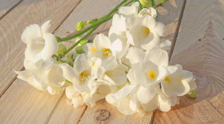 Bulbs in Bulk - Grandmas freesias cheapest prices in Australia