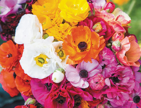Bulbs in Bulk - rananculus garden mix for sale australia