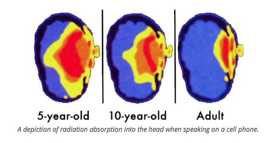 radiation absorption into head