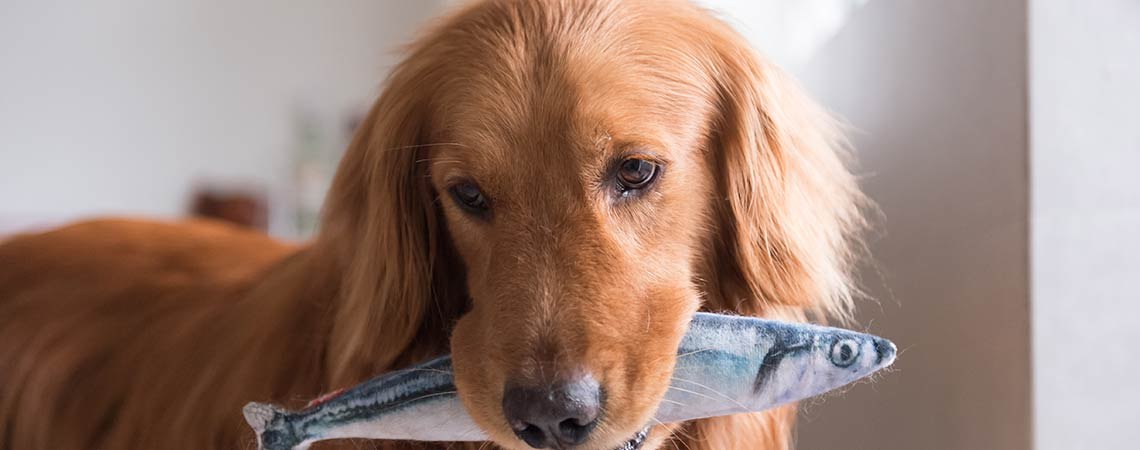 Is Fish Oil Safe For Dogs?
