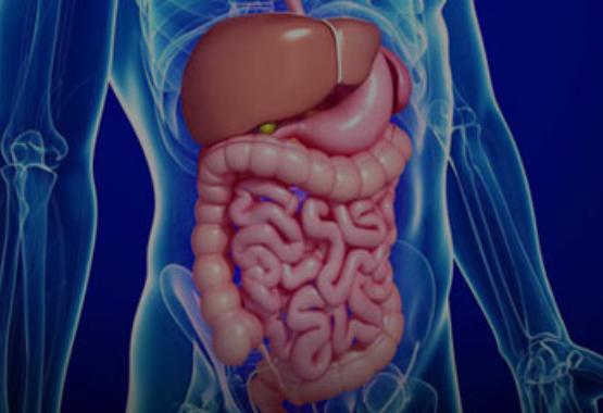 CBD & The Digestive System – Fab CBD