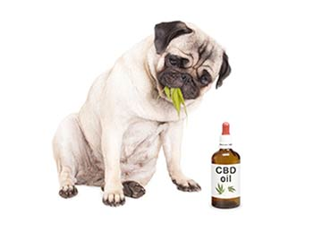 Claims that Support CBD Use in Pets