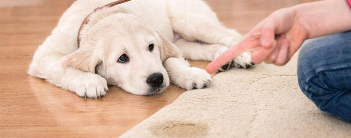 Four Steps On How to Stop Your Dog From Chewing With Anti-Chew Spray