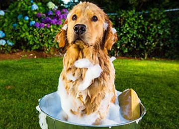 Using The Right Pet Shampoo & Conditioner