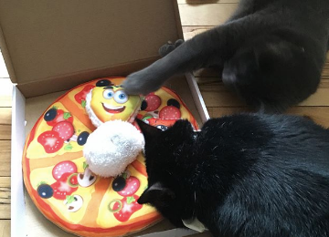 Two Black Cats Playing With Easyology Pets Cat Pizza Toy Toppings
