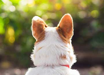 Eight Common Canine Eye Disorders To Watch Out For