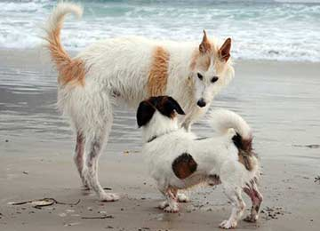 Socizliaing Your Dog