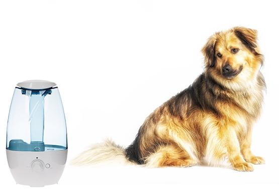 Use Humidifier