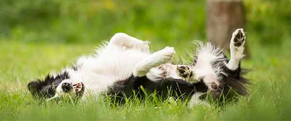 5 Tips To Relieve Your Dog's Dry Itchy Skin