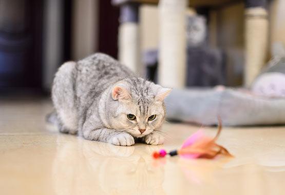 Make Your Cat Feel Like a Predator