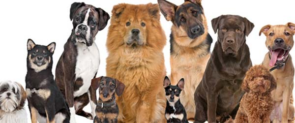 Is Your Dog Breed On the List?